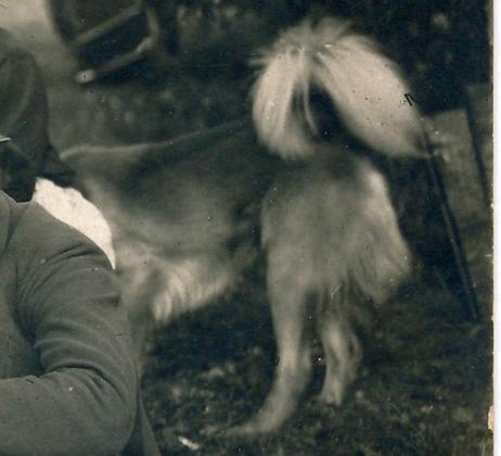 Umbusi-Kablaküla kartulikoorijad, detail rõngassabaga koerast