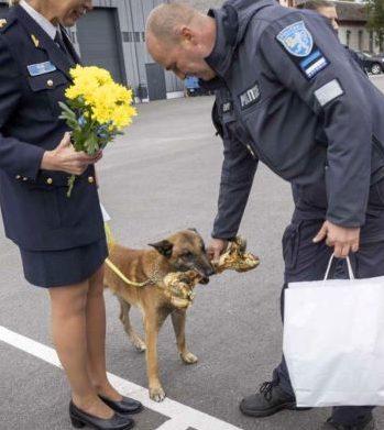 Kümneaastane patrullkoer Willy töötas peamiselt jäljekoerana ja aitas kadunud inimesi leida ning päästa. Foto: Politsei- ja piirivalveamet.